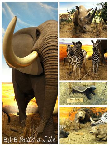 Cabela's Animals @ BandBBuildALife.com