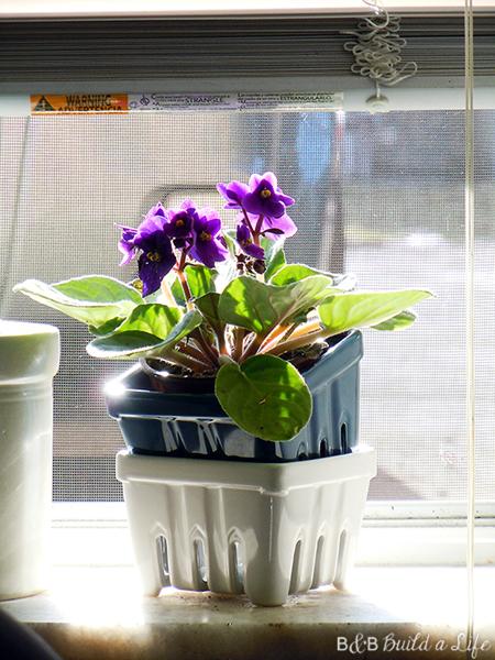 Spring Flowers @ BandBBuildALife.com
