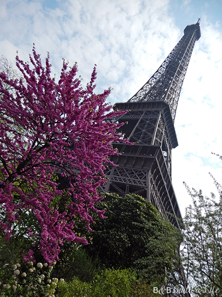 springtime flowers in paris @ BandBBuildALife.com