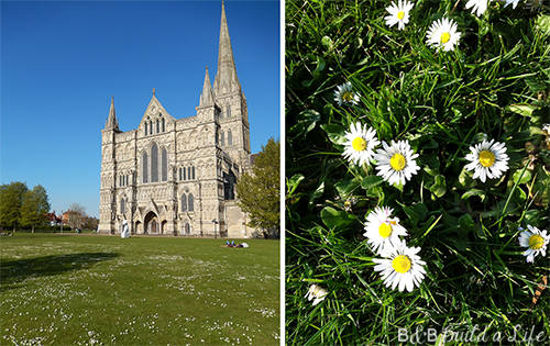 spring daisy flowers at Salisbury Cathedral @ BandBBuildALife.com