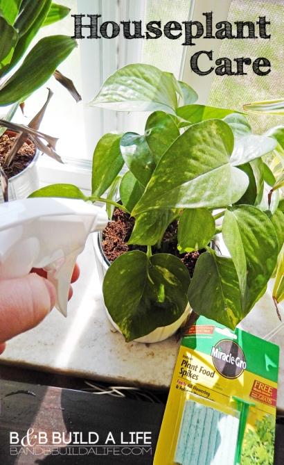 easy houseplant care @ BandBBuildALife.com