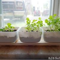 Windowsil Herb Garden