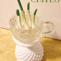 Recycle Your Green Onions